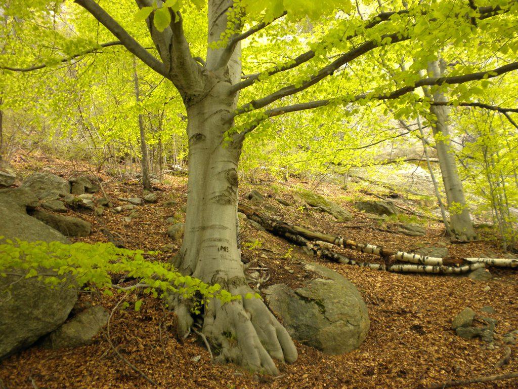 Musica nel bosco i camosci bianchi for Cabina innevata nei boschi