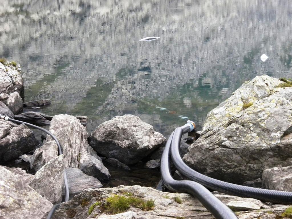 Alla ricerca del limite perduto i camosci bianchi for Grosso pesce di lago