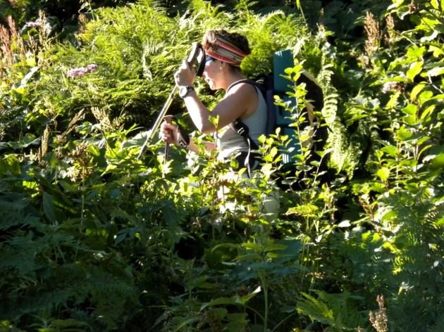 sentiero invaso dalla vegetazione