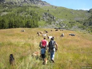 Alpe d'Attia - Transumanza