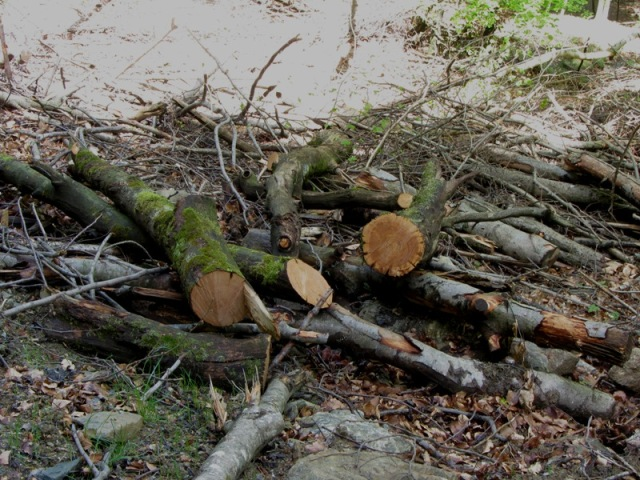 Il sentiero qui è interrotto dai rami delle piante tagliate che sono stati gettati a valle della strada.