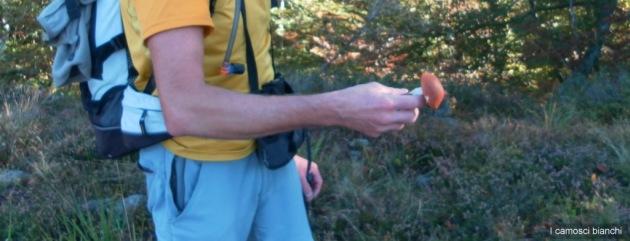 Crava (Leccinum aurantiacum)