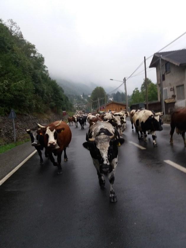 Passeggiando per Chialamberto