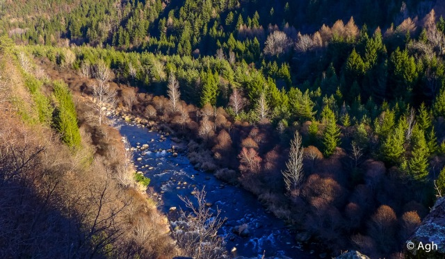 Un ecosistema fluviale di grande ricchezza naturalistica
