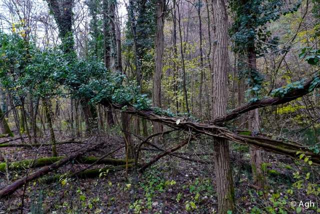 Nelle golene una spettacolare vegetazione che ricorda quasi a giungla amazzonica...
